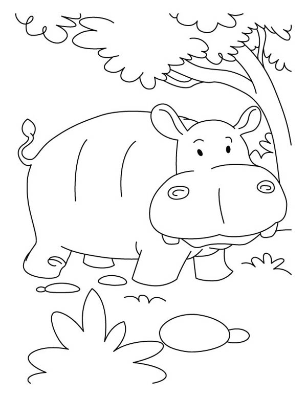 Cute Baby Hippo coloring page | Free Printable Coloring Pages | 776x600