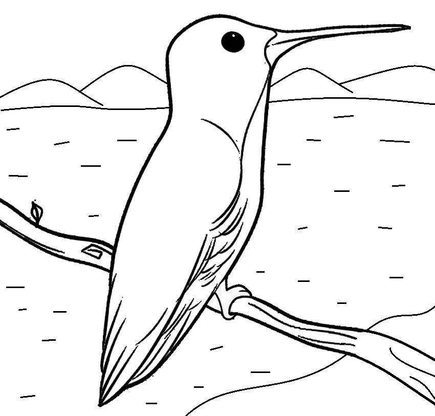 Free Hummingbird Coloring Page