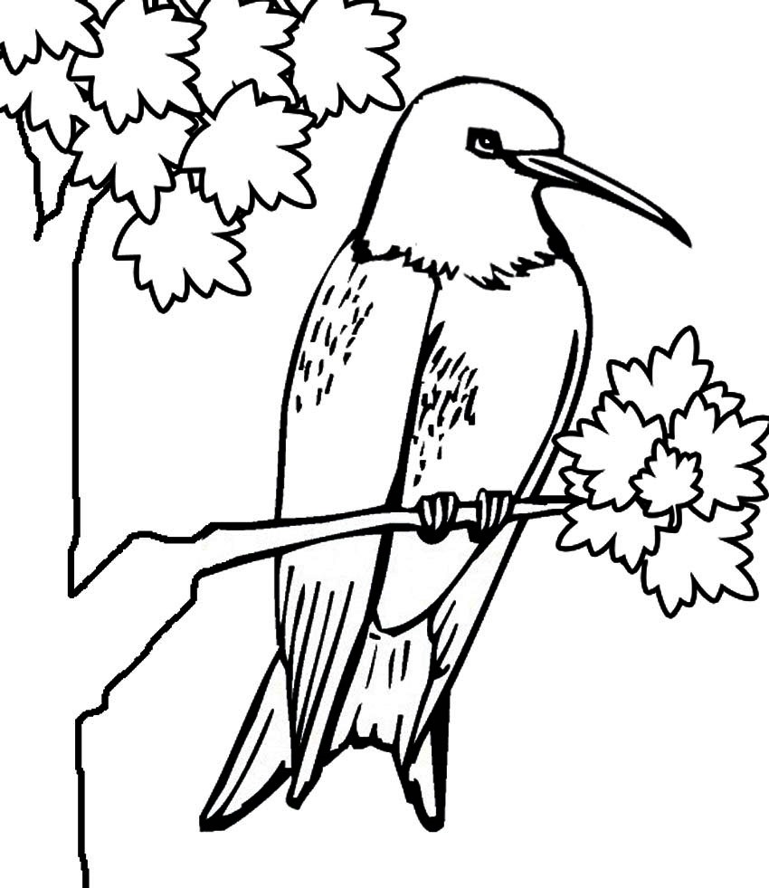 Hummingbird Coloring Pages to Print