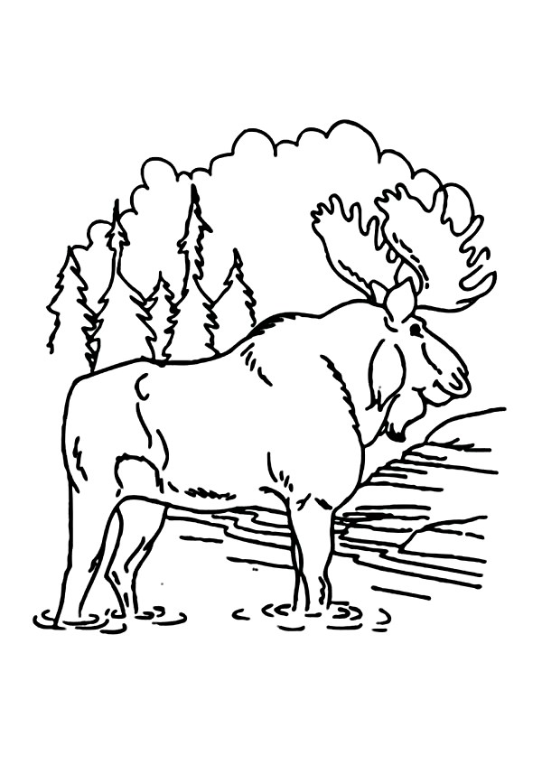 Moose Coloring Pages 360ColoringPages