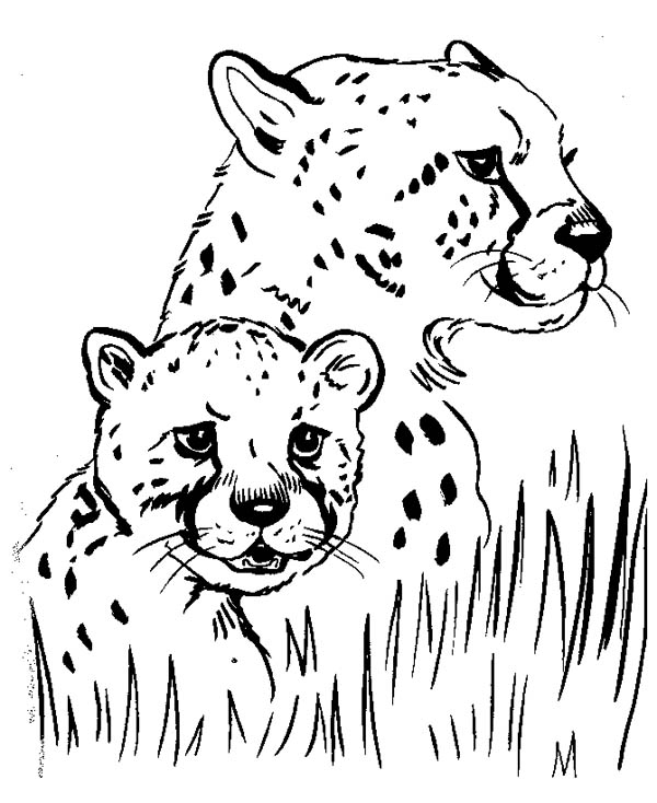 Cheetah Family Coloring Page Baby Pages Printable