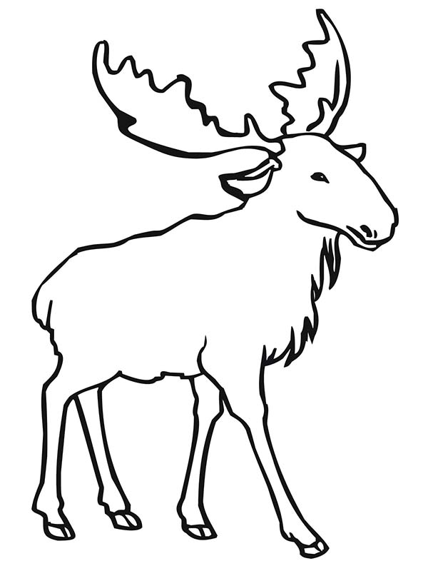 Printable Moose Coloring Page