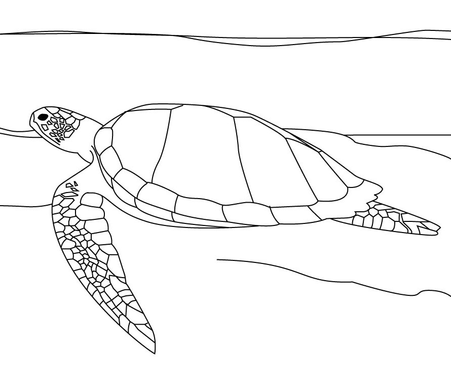 downloadable sea turtle coloring pages - photo#19