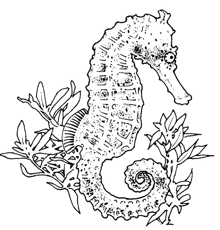 Realistic Seahorse Coloring Page