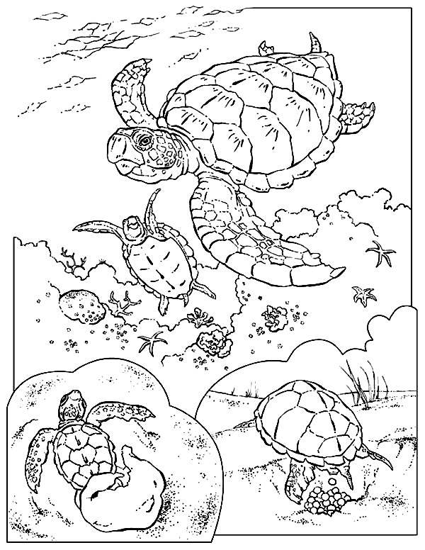 Sea Turtle Coloring Pages | 360ColoringPages
