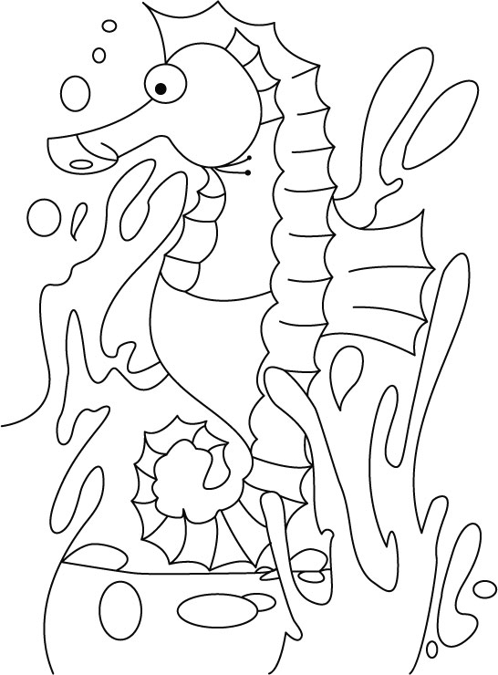 Seahorse coloring pages 360coloringpages for Mister seahorse coloring page