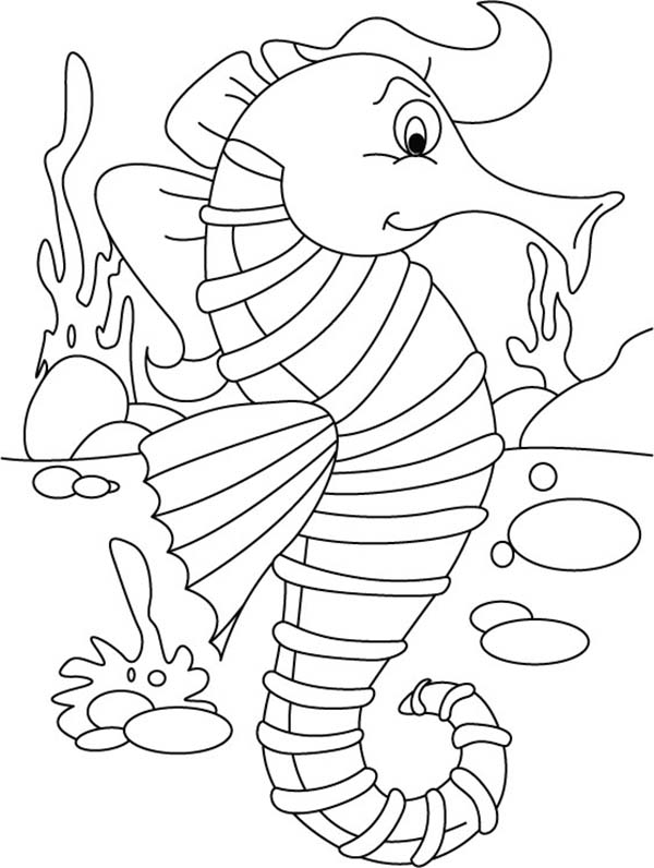 Seahorse Picture to Color