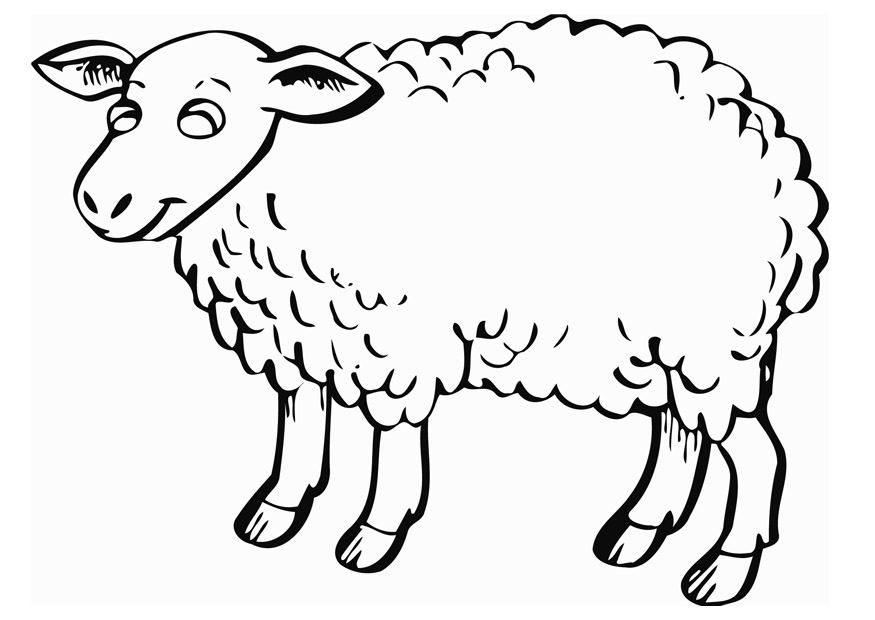 Sheep Coloring Picture