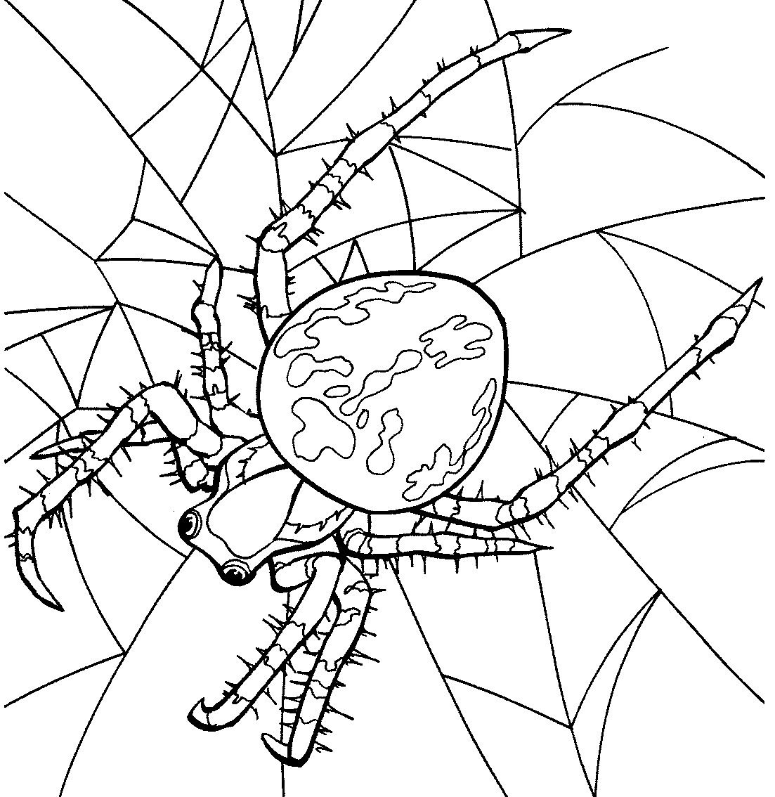 Spider Coloring Page Free