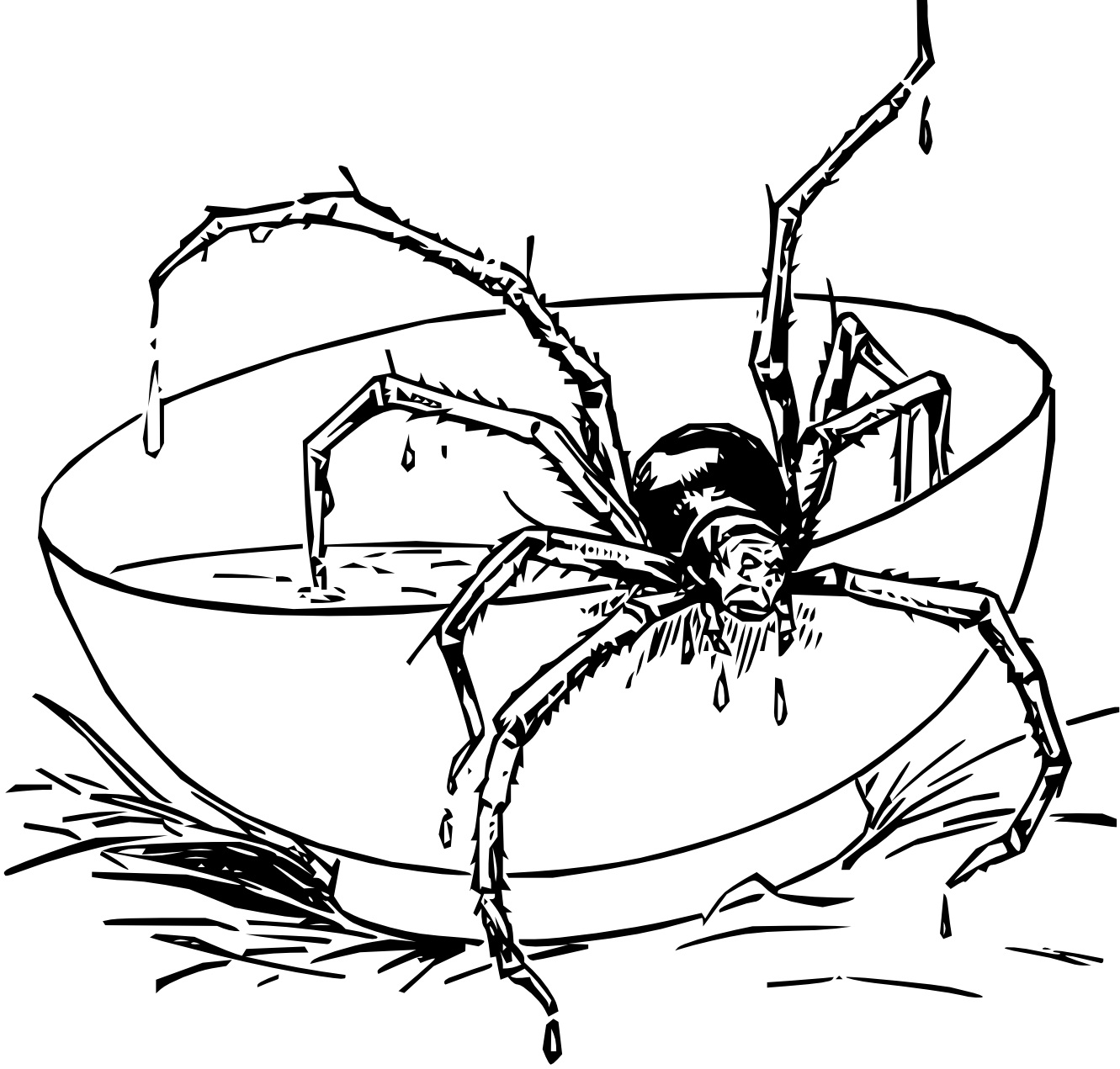 Spider Coloring Page Halloween