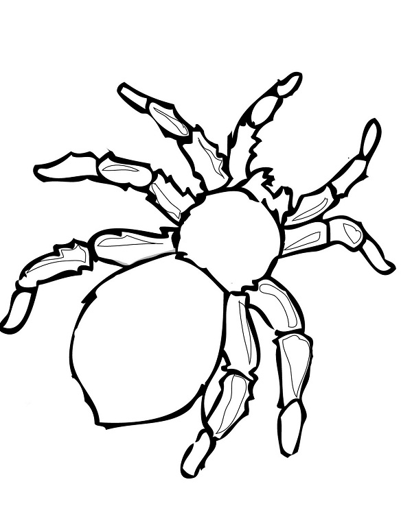 Free Spider Coloring Pictures