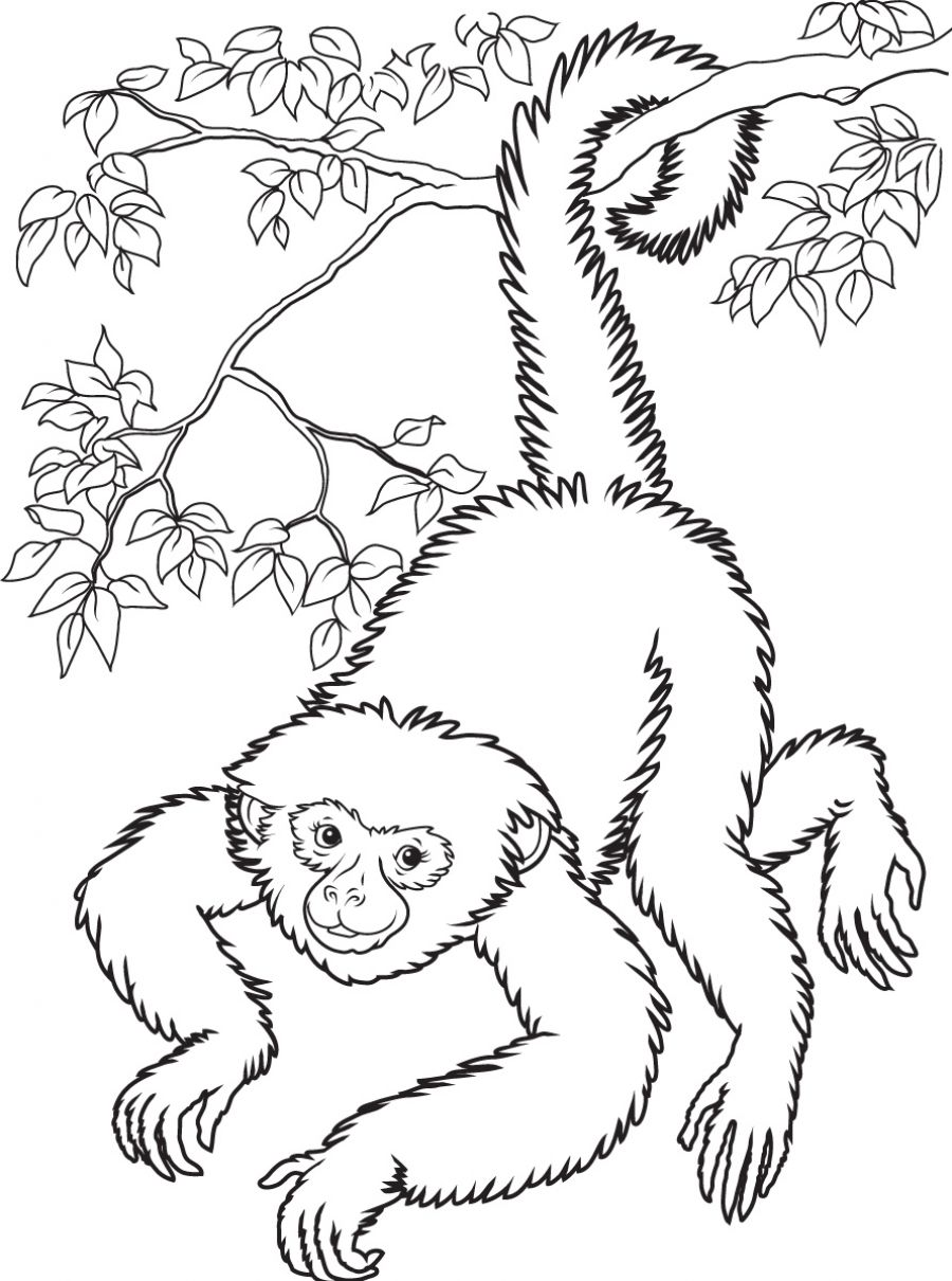 Spider Monkey Coloring Page