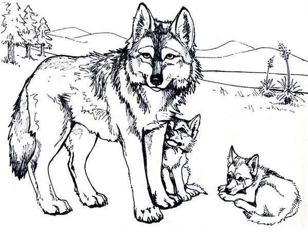 Wolf Coloring Pages Printable Free