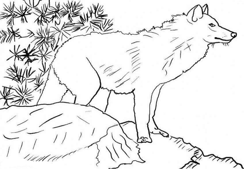 Wolf Coloring Sheet