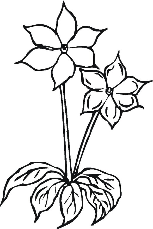 Printable Flower Coloing Pictures