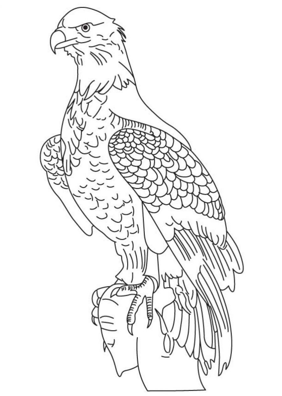 Bald Eagle Coloring Pages for Kids (Printable ...