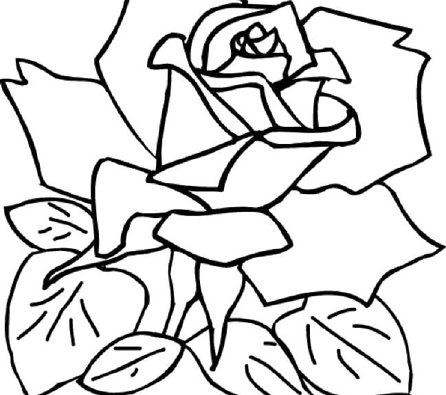 Rose Coloring Pages Free Printable