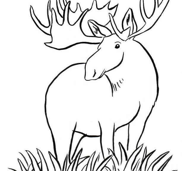 Moose Coloring Pages Free