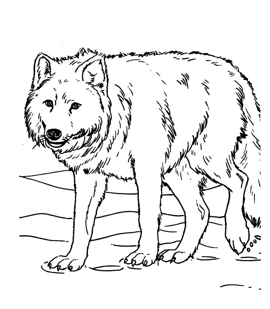 This is a graphic of Gargantuan free wolf coloring pages